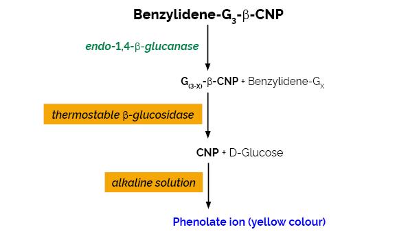 Scheme-K-CellG3 CellG3 Megazyme