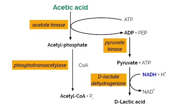 Scheme-K-ACETRM ACETRM megazyme