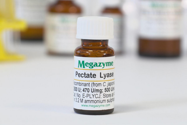 Pectate lyase Cellvibrio japonicus E-PLYCJ