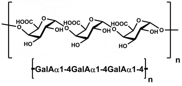 Polygalacturonic Acid PGA P-PGACT