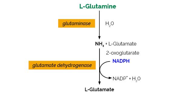 Scheme-K-GLNAM GLNAM Megazyme