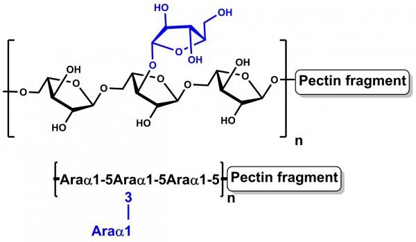 Arabinan Sugar Beet P-ARAB