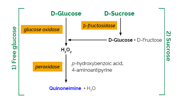 Scheme-K-SUCGL SUCGL Megazyme