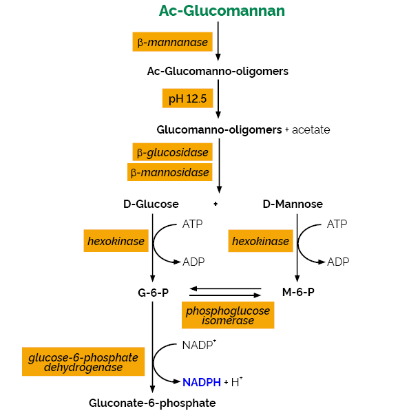 Glucomannan Assay Kit K-GLUM Scheme