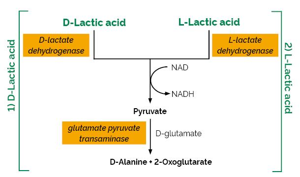Scheme-K-DLATE DLATE Megazyme