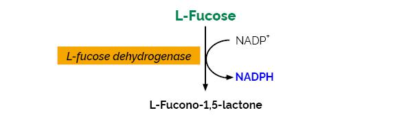 Scheme-K-FUCOSE FUCOSE Megazyme