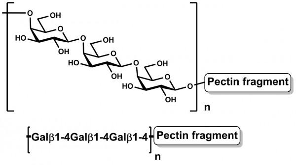 Pectic Galactan Potato P-PGAPT