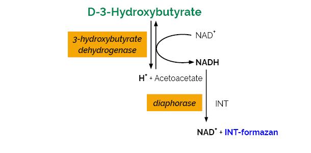 Scheme-K-HDBA HDBA Megazyme