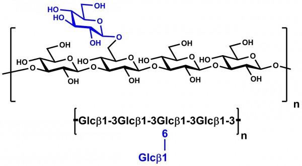 beta-Glucan Yeast Alkali Soluble P-BGYST