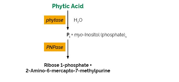 Scheme-K-PHYTASE PHYTASE megazyme