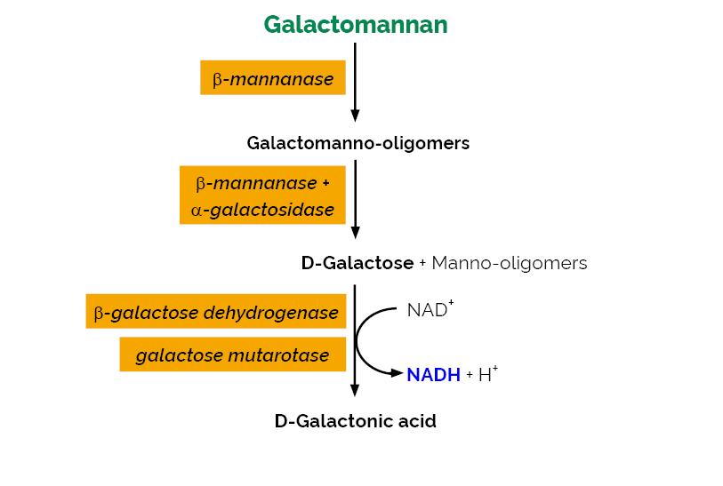 Scheme-K-GALM GALM Megazyme