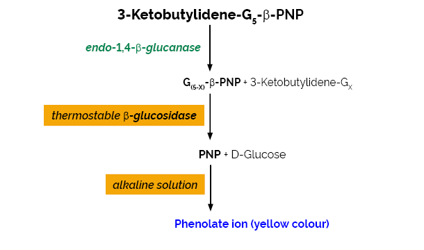 Scheme-K-CellG5-2V CellG5 Megazyme