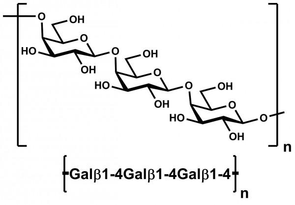 Galactan Potato P-GALPOT