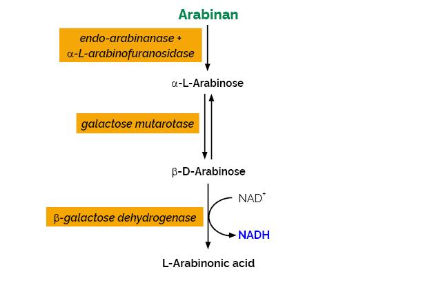 Scheme-K-ARAB ARAB Megazyme