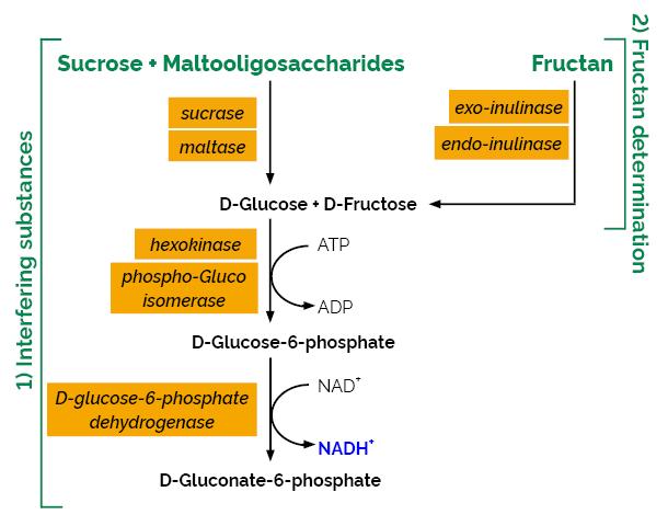 Scheme-K-FRUCHK FRUCHK Megazyme