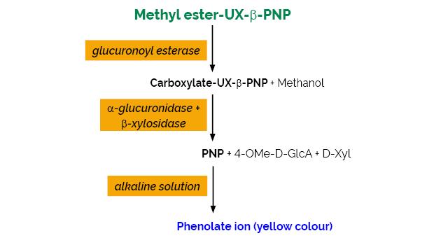 Scheme-K-GEUX3 GEUX3 Megazyme