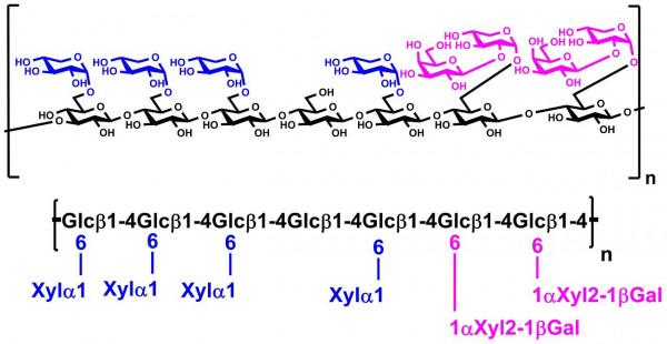Xyloglucan Tamarind P-XYGLN