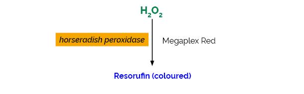 Scheme-K-MRH2O2 MRH2O2 Megazyme