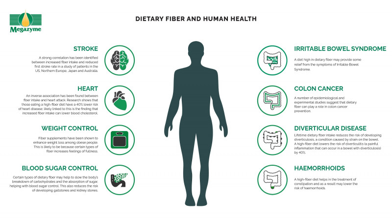 where are dietary fibers absorbed