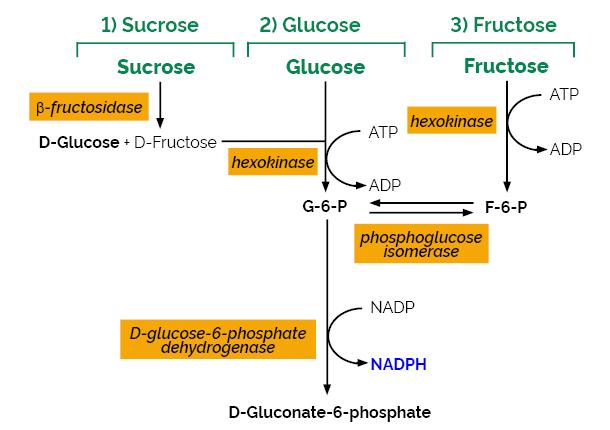 Scheme-K-SUFRG SUFRG Megazyme