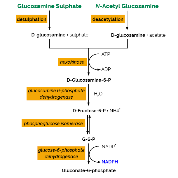 D-Glucosamine Assay Kit K-GAMINE Scheme