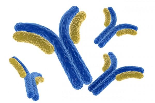 JIM5 [Anti-Homogalacturonan] Antibody AB-JIM5