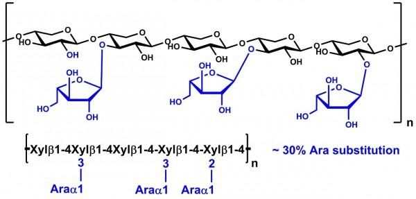 Wheat Arabinoxylan enzyme debranched 30% Ara P-EDWAX30