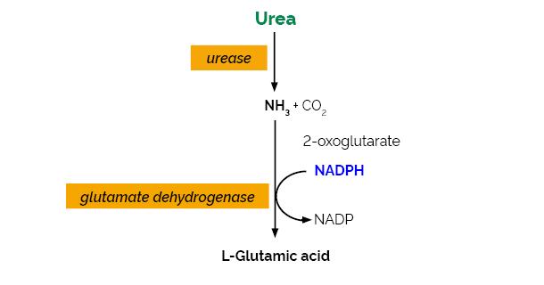 Scheme-K-URAMR URAMR Megazyme